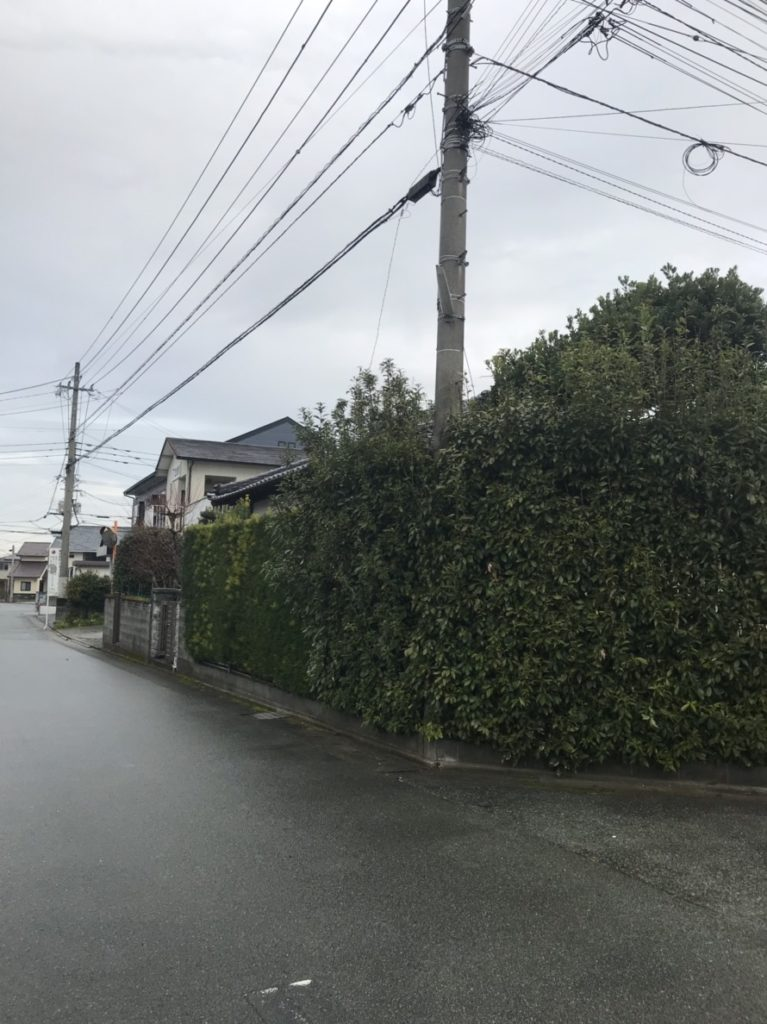 剪定  E様邸  3/3