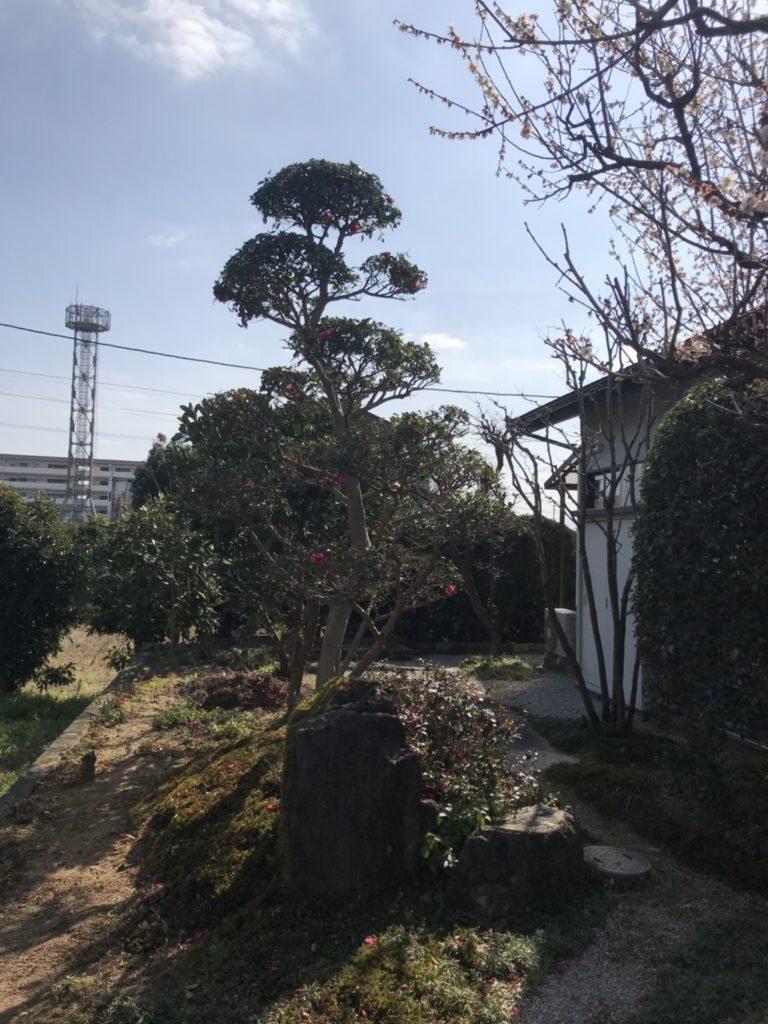 夏の残りのお手入れ〜✂️朝倉市 H様邸1/2